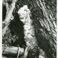 4-28b_TreeFormation.jpg