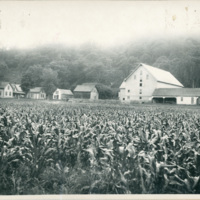 George Williams farm, Dog River Valley, Berlin